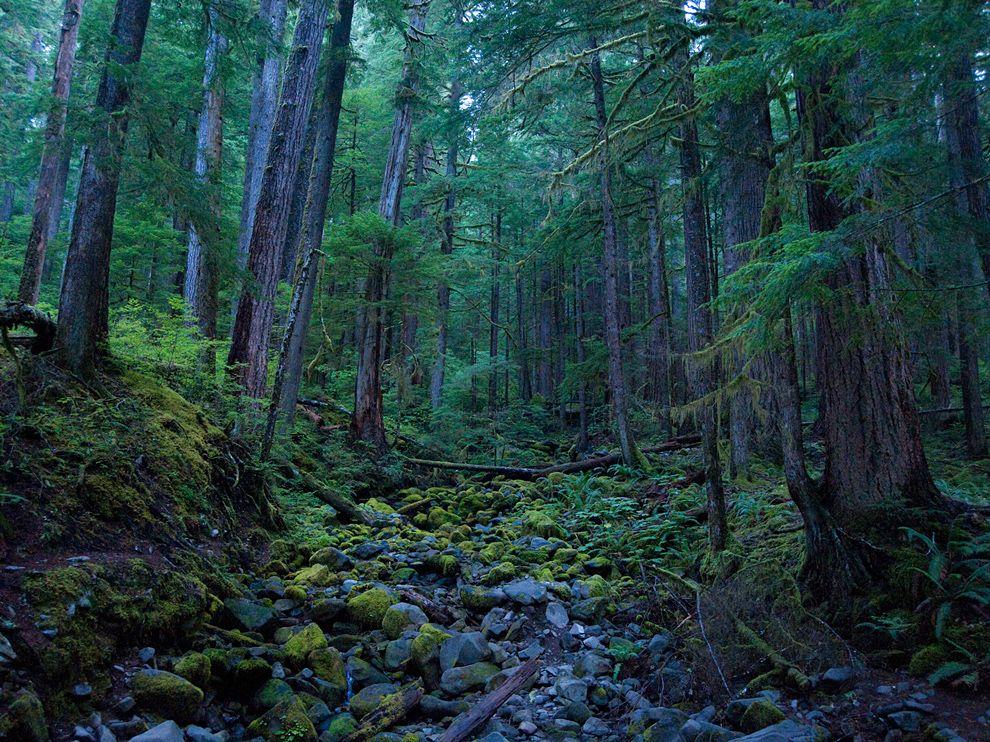 hoh-rain-forest-olympic-national-park_51546_990x742